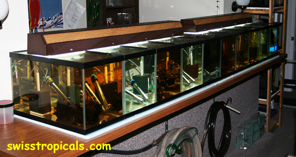 Groovy Index Of Web Pictures 600 Dpi Fishroom Download Free Architecture Designs Scobabritishbridgeorg
