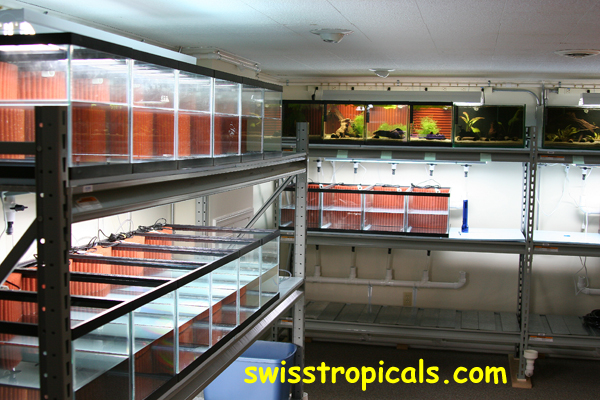 Swell Index Of Web Pictures 600 Dpi Fishroom Download Free Architecture Designs Scobabritishbridgeorg