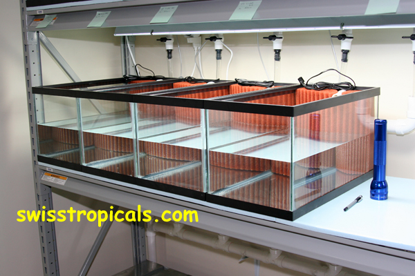Brilliant Index Of Web Pictures 600 Dpi Fishroom Download Free Architecture Designs Scobabritishbridgeorg