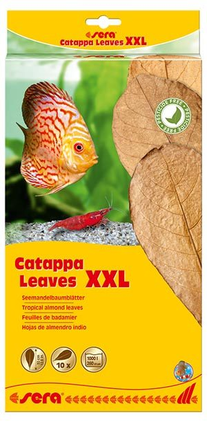sera-catappa-leaves-xxl-10-st